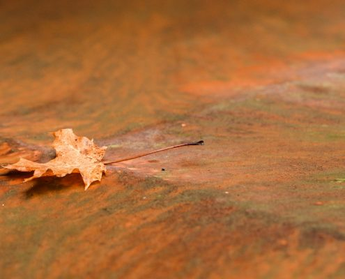 Maple leaf on rusty surface Rust-Oleum